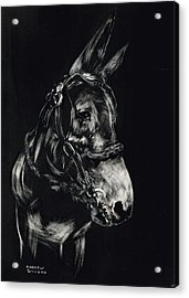 Mule Polly In Black And White Acrylic Print