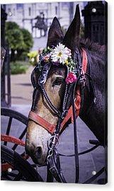 Mule Portrait Acrylic Print by Garry Gay