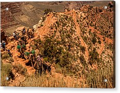 Acrylic Print featuring the photograph Mule Train South Kaibab Trail by Claudia Abbott