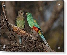 Mulga Parrot Pair Acrylic Print