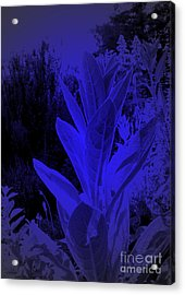 Mullein In The Moonlight Acrylic Print by JoAnn SkyWatcher