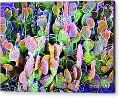 Acrylic Print featuring the digital art Multi-color Artistic Beaver Tail Cactus by Linda Phelps
