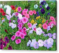 Multi Color Flowers Acrylic Print by Ralph Liebstein