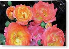 Acrylic Print featuring the photograph Multi-color Roses by Jerry Battle