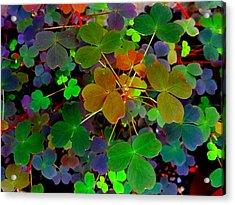 Multi-coloured Leaves Acrylic Print