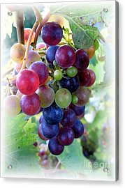 Multicolor Grapes Acrylic Print