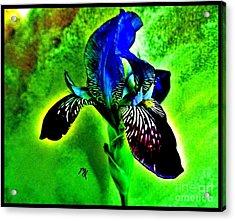 Multicolor Iris Acrylic Print by Marsha Heiken