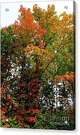Multicolor Maple Acrylic Print
