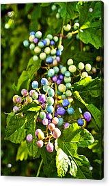 Multicolored Berry Vine Acrylic Print