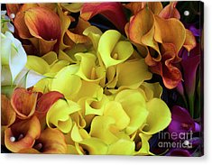 Multicolored Calla Lillies Acrylic Print
