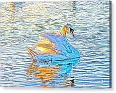Multicolour Swan Acrylic Print