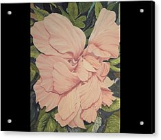 Multipetaled Pink Hibiscus Acrylic Print