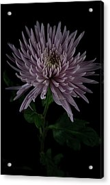 Acrylic Print featuring the photograph Mum, No.3 by Eric Christopher Jackson