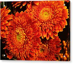 Mums In Flames Acrylic Print