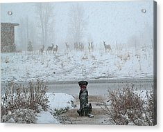 Murphy Watches The Deer Acrylic Print by Eric Tressler