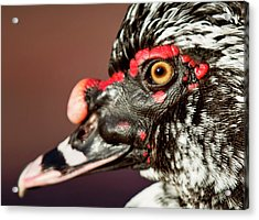 Acrylic Print featuring the photograph Muscovy by Sue Collura
