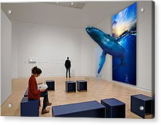Museum Whale Watching Acrylic Print