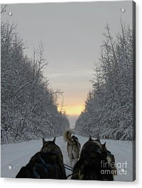 Mushing Into The Sunset Acrylic Print by Tanja Hymel