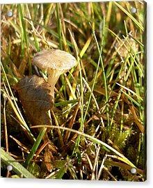 Mushroom And Leaf Acrylic Print