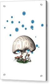 Mushroom Dreams Acrylic Print by Carol and Mike Werner