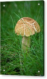 Mushroom In The Grass Acrylic Print by Teresa Mucha