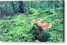 Mushroom In The Green Wood Acrylic Print