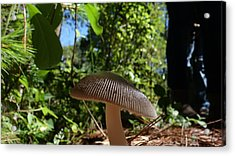 Acrylic Print featuring the photograph Mushroom by Matthew Bamberg