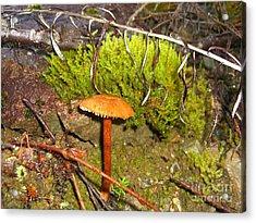 Mushroom Microcosm Acrylic Print by Jim Thomson