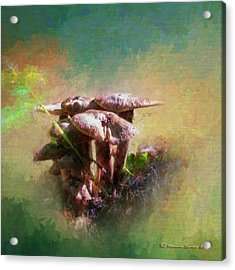 Mushroom Patch Acrylic Print