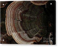 Acrylic Print featuring the photograph Mushroom Shells by Kim Henderson