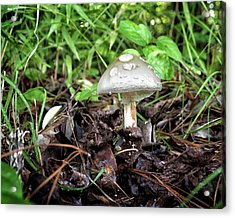 Acrylic Print featuring the photograph Mushroom, Toadstool Or Just A Fun Guy by Bill Swartwout Fine Art Photography