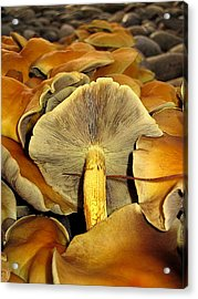 Acrylic Print featuring the photograph Mushroom Two by John King