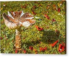 Mushroom Upclose Acrylic Print