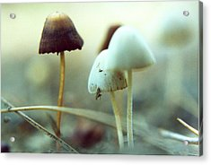 Mushrooms Acrylic Print by Don Youngclaus