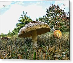 Mushrooms Acrylic Print by Edward Sobuta