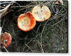 Mushrooms On The Forest Floor Acrylic Print