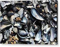 Mussel Shells Acrylic Print by Rebecca Fulweiler