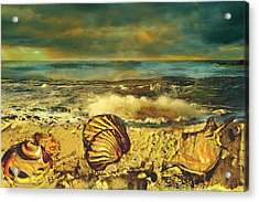Mussels On The Beach Acrylic Print by Anne Weirich
