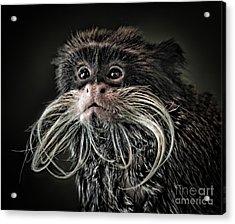 Mustache Monkey IIi Altered Acrylic Print