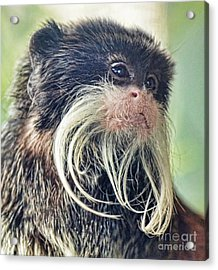 Mustache Monkey Watching His Friends At Play Acrylic Print