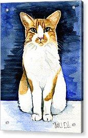 Mustached Bicolor Beauty - Cat Portrait Acrylic Print