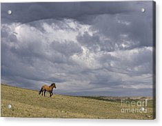 Mustang And Stormy Sky Acrylic Print by Jean-Louis Klein & Marie-Luce Hubert