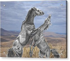 Mustang Battle Acrylic Print by Russ  Smith