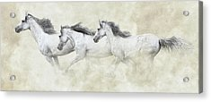 Mustang In Motion Acrylic Print