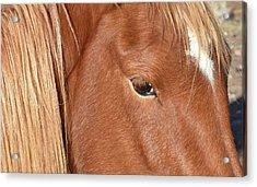 Mustang Macro Acrylic Print