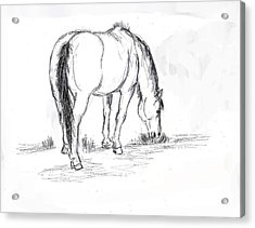 Mustang Mare Field Sketch Acrylic Print by Dawn Senior-Trask