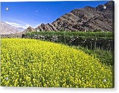 Mustard Field, Hemis, 2007 Acrylic Print