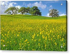 Acrylic Print featuring the photograph Mustard Field by Mark Greenberg