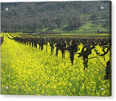 Acrylic Print featuring the photograph Mustard Flowers by Kim Pascu