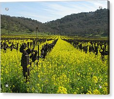 Mustard In The Vineyards Acrylic Print